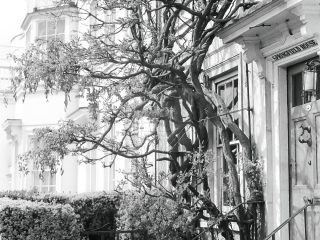Springfield house with tree outside in 1950s black and white picture
